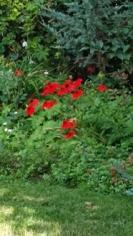 favourite perennials