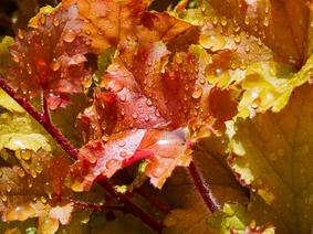 autumn-leaves-1773646__340