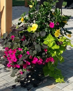 garden successes