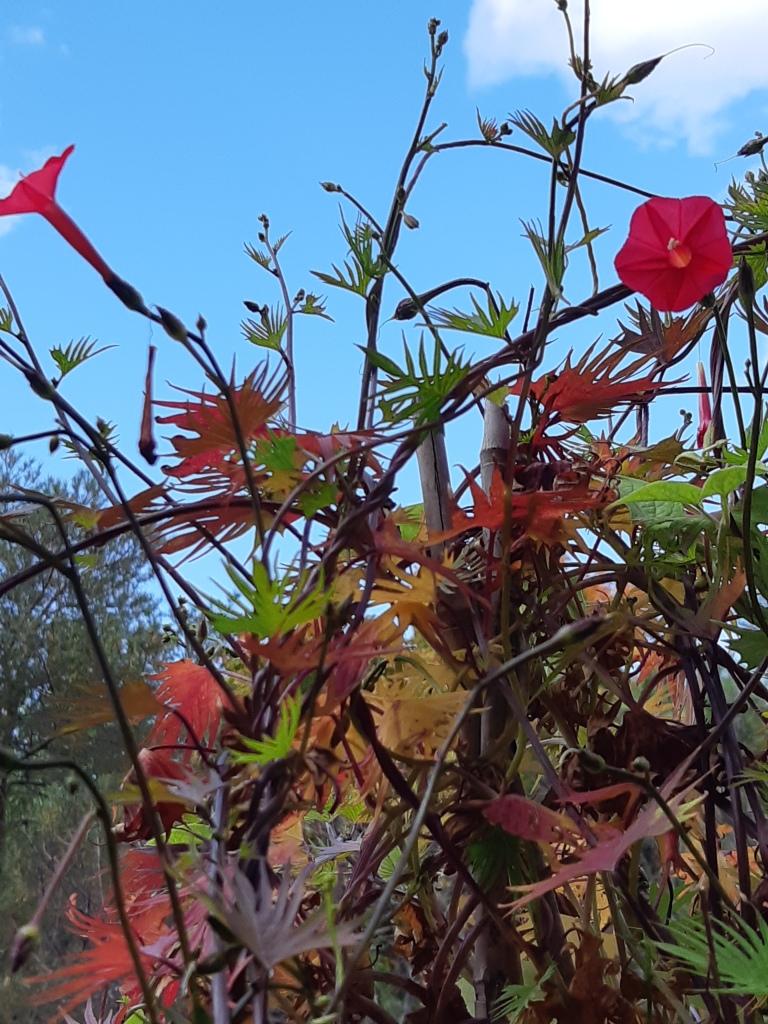 October blooms