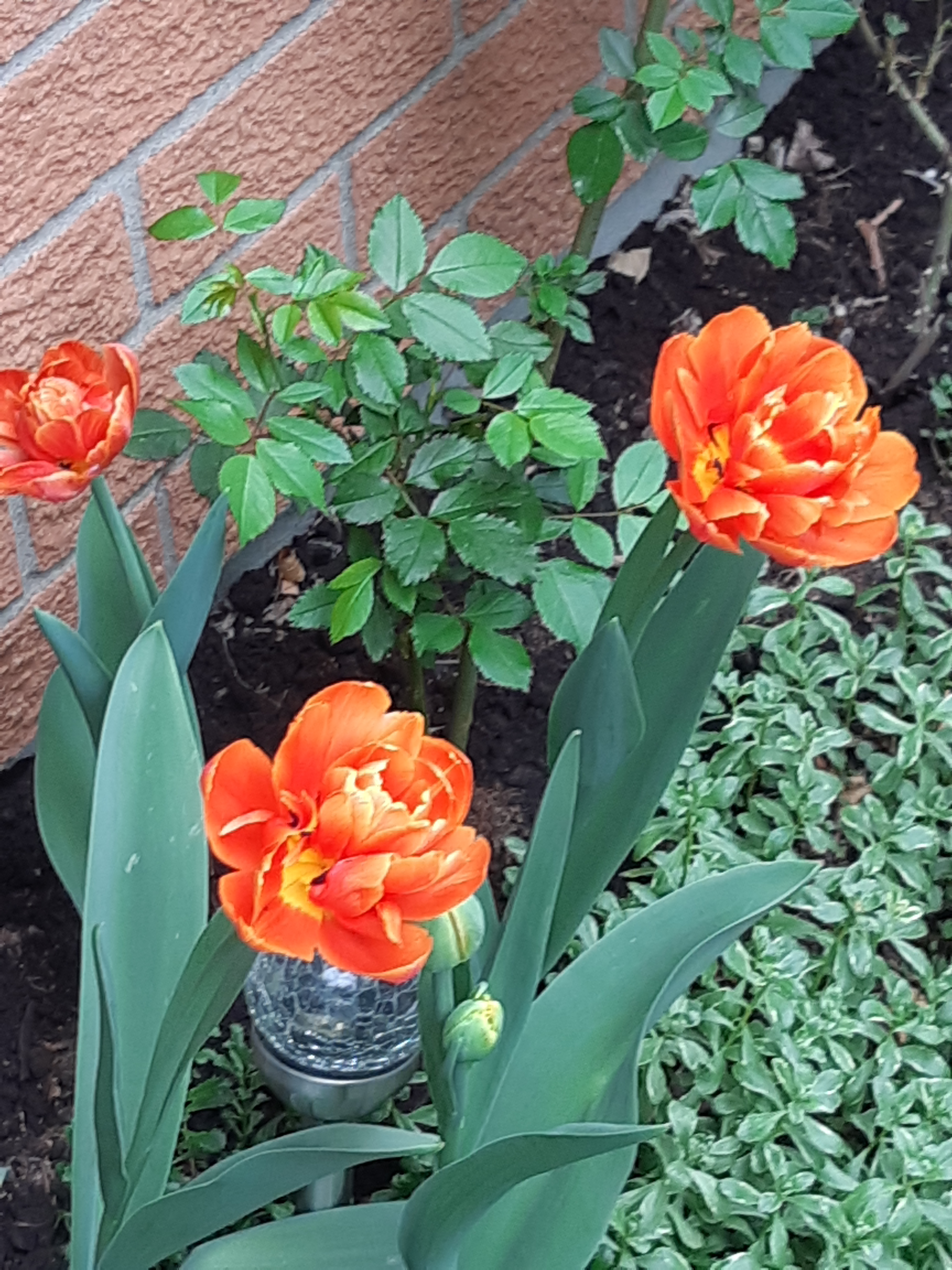 which plants bloom in spring
