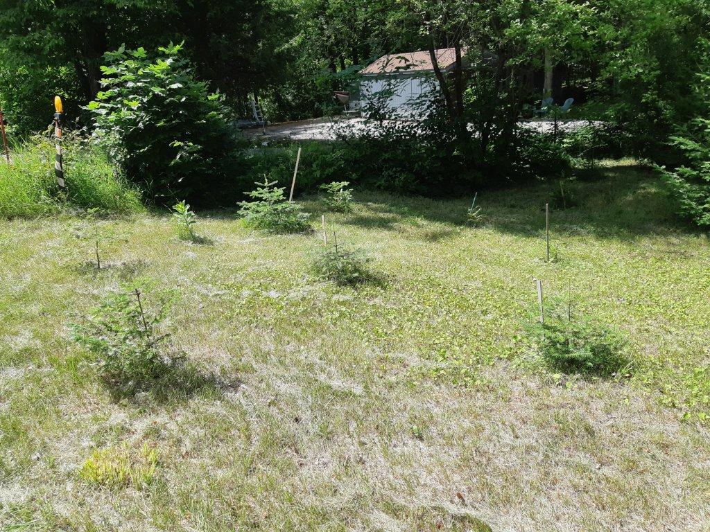 Cottage wildflower garden