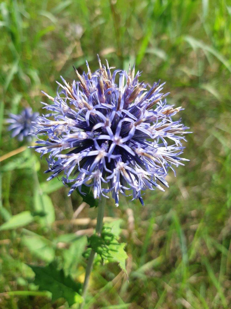 Wildflower Ridge is Blooming