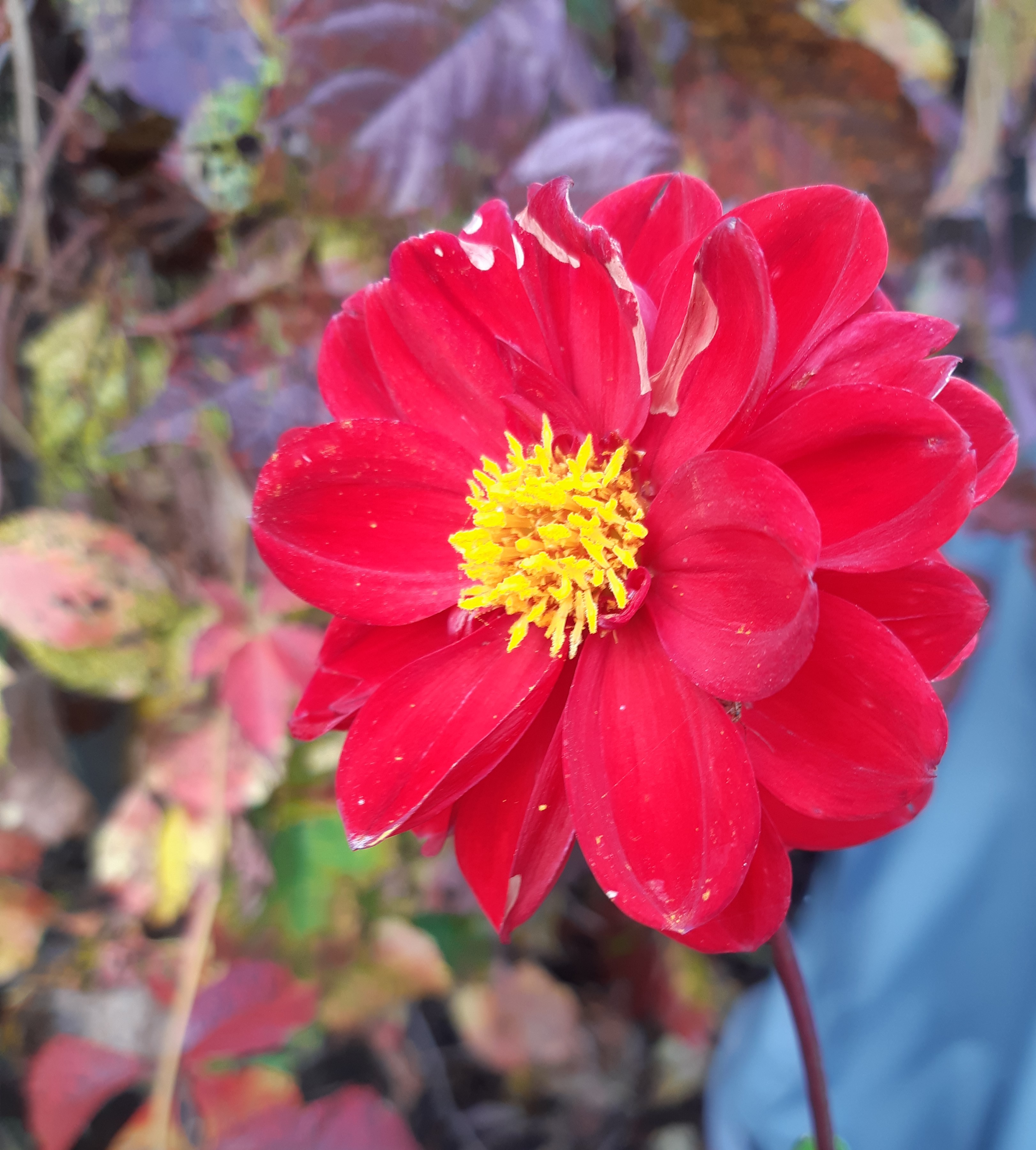 What's Blooming in October?